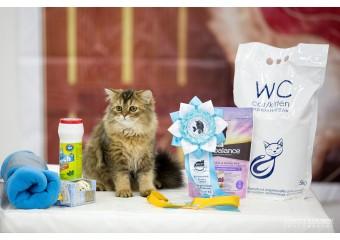 """Тюмень, выставка кошек """"Кошачий блюз"""""""