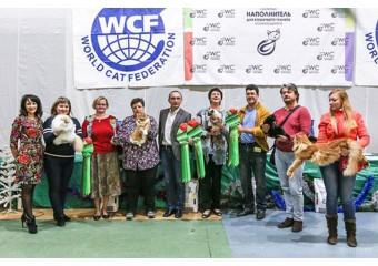 WCF Кубок Каменный Цветок в Екатеринбурге.