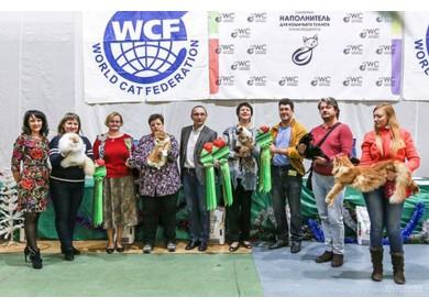 WCF Кубок Каменный Цветок в Екатеринбурге