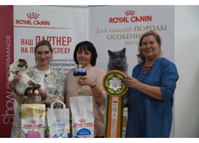"""Международная выставка кошек """"Малахитовая шкатулка"""". г. Челябинск"""